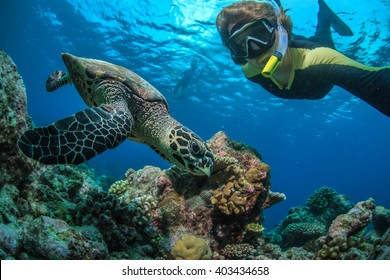A freedifer making selfie with turtle underwater in Indian ocean in Maldives. Tropical activity water sport design.