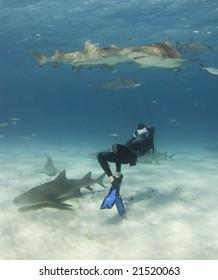 A freediver bends over backwards to get a shot of Lemon Sharks (Negaprion brevirostris) circling overhead