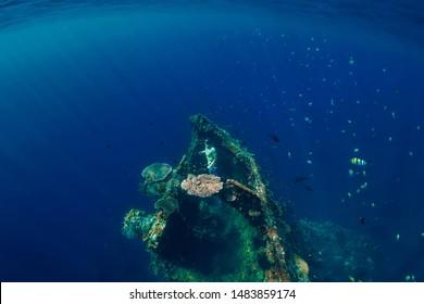 Freediver man dive underwater at shipwreck. Freediving in ocean