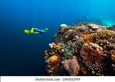 Freediver swims underwater near the vivid coral reef with colorful corals and schools of fish. Philippines