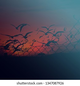 Freedom concept. Birds flying behind a steel wire mesh