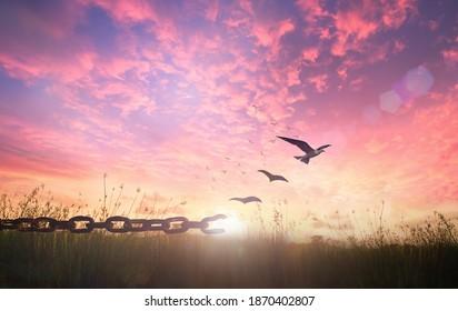 Silhouette von Vögeln, die fliegen, und kaputte Ketten auf Hintergrund bei Herbstsonnenuntergang
