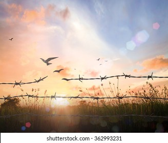 Freedom concept: Silhouette of bird flying and barbed wire over meadow sunset background