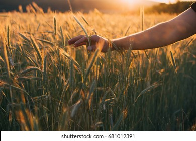 Freedom, Feeling freedom, Summer feeling, Happy, Love nature, Nature lover, Sunset picture