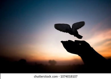 Freedom and peace concept, silhouette of hand release bird