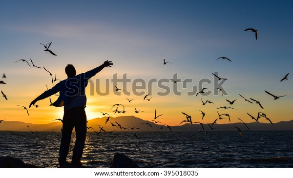 freedom, peace and seagulls