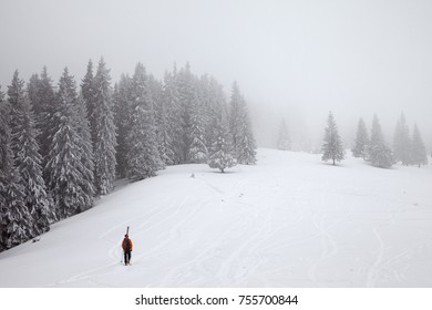 Freerider with skis on backpack go up on snow off-piste slope in frozen fir forest with fog sky at gray winter day. Carpathian Mountains, Ukraine.