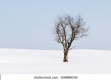 Freestanding tree on winter field and blue sky