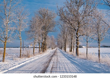 Freezing temperatures of Northern Europe in winter. Snowy alley with trees.