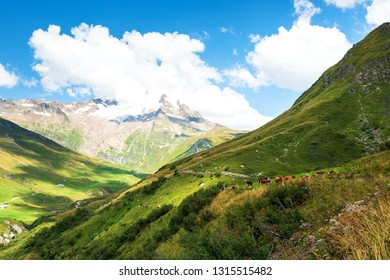 French Alps in summer. Grazing cows at alpine pasture and the Aiguille des Glaciers, mountain in the Mont Blanc massif, at background. View From Chapieux valley, Savoie, France.