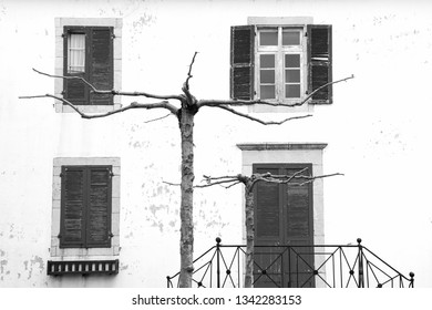 French Basque Country, France. Old typical village house with wooden shutters and door and stone wall. Bare tree with stretched twigs at foreground. Black white photo.