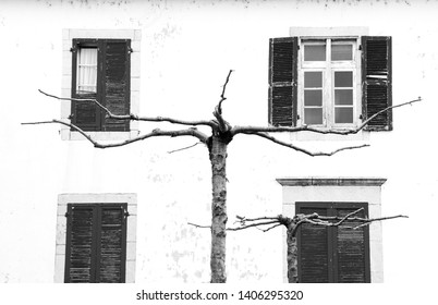 French Basque Country, France. Old typical village house with wooden shutters, door and stone wall. Bare tree with stretched twigs at foreground. Black white abstract art background conceptual photo.