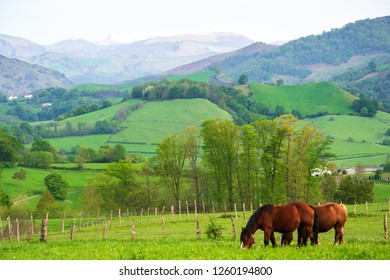 French Basque Country. Two horses grazing at meadow. Village houses and mountains with snowed peak at background. France.