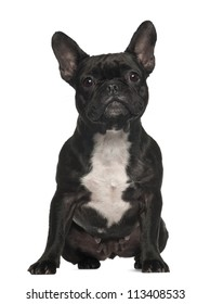 French Bulldog, 3 years old, sitting against white background