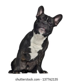 French Bulldog, 3 years old, sitting, isolated on white