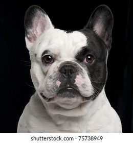 French Bulldog, 3 years old, in front of black background