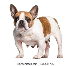Dog Stands Images, Stock Photos & Vectors | Shutterstock