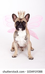 french bulldog with a crown and wings