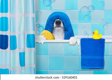 french bulldog dog in a bathtub not so amused about that , with yellow plastic duck and towel,wearing a bathing cap