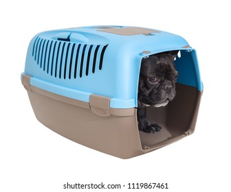 French bulldog dog in carrying on white isolated background