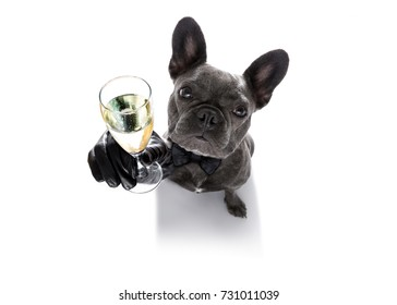 4b19bd132502 french bulldog dog celebrating new years eve with owner and champagne glass  isolated on white background