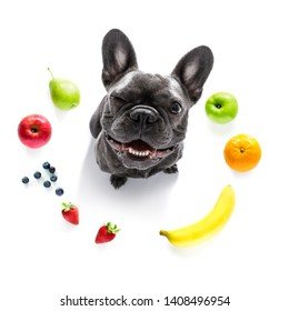 french bulldog dog  with guilty conscience  for overweight, and to loose weight , isolated on white background and fresh vegan vegetarian fruit around