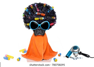 baf8017036ad5f french bulldog dog with hair rulers afro curly wig hair at the hairdresser  with orange towel