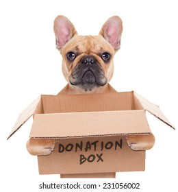 french bulldog dog holding a donation box, isolated on white background