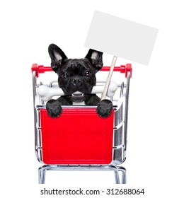 french bulldog dog inside a shopping cart trolley with bone in mouth  behind blank empty banner or placard isolated on white background ready for sale