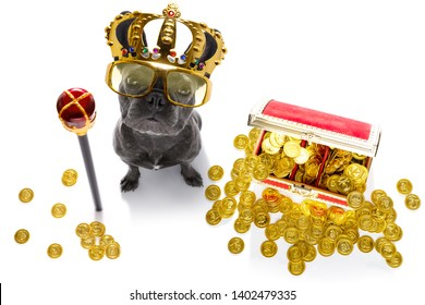 french bulldog dog as king with crown  looking and staring  at you ,while sitting on the ground or floor, isolated on white background, with gold coins and rich
