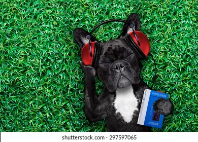 french bulldog dog  listening to oldies with headphones or earphones from a  retro cassette tape   recorder, relaxing with eyes closed,lying on  grass at the park or meadow
