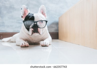 French bulldog dog lying on the floor with glasses on face