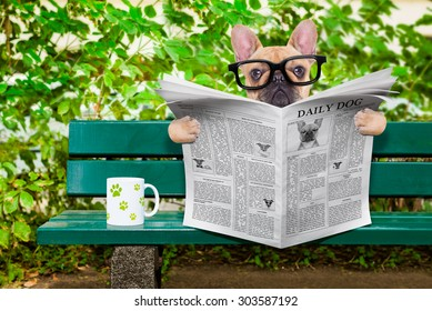 french bulldog dog reading a newspaper or magazine sitting on a bank at the park, relaxing and having a cup of tea or coffee