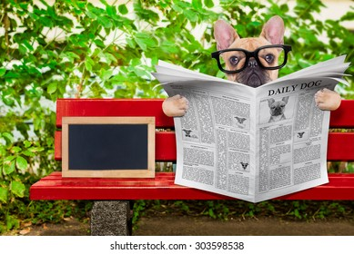 french bulldog dog reading a newspaper or magazine sitting on a bench at the park, relaxing , empty blank blackboard beside