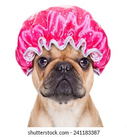 french bulldog dog ready to have a bath or a shower wearing a bathing cap, isolated on white background