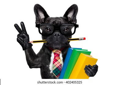 french bulldog dog, with stack of books and pencil in mouth