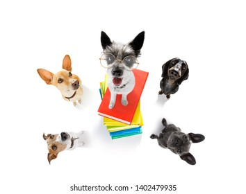 french bulldog  dog with   a tall stack of books ,very smart and clever , isolated on white background in a group team in a row