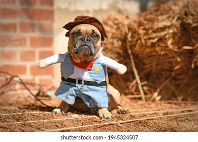 French Bulldog dog wearing Halloween cowboy full body costume with fake arms and pants in front of hay bale