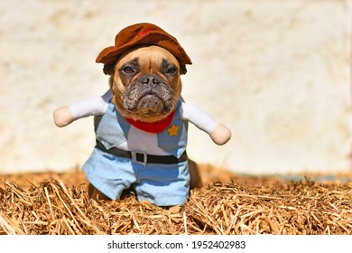 French Bulldog dog wearing Halloween cowboy full body costume with fake arms and pants standing on hay bale