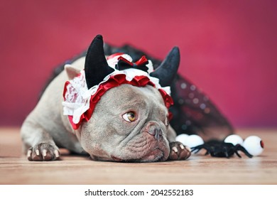 French Bulldog dog wearing red devil horn headband with ribbon and black tutu in front of red background