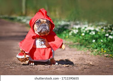 French Bulldog dos dressed up as fairytale character Little Red Riding Hood with full body costumes with fake arms wearing basket in forest