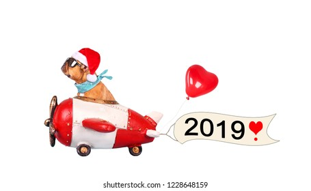 French Bulldog enjoys a ride in an aircraft, with a banner for happy new year 2019