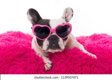 French bulldog with heart sun glasses on a pillow isolated on white