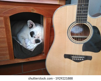 French bulldog and Ibanez guitar