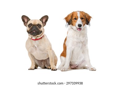 French Bulldog and a Kooiker Dog in front of a white background