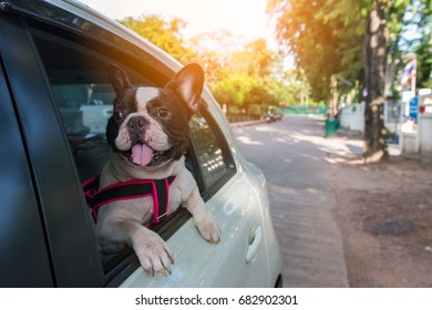 a french bulldog is looking outside the car while traveling for road trip