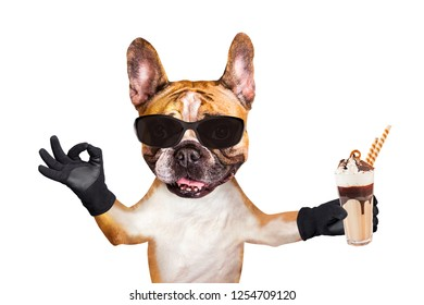 french bulldog on white isolated background keeps refreshing cocktail refreshing in Sunglasses