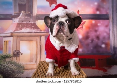 French bulldog posing in santa costume for christmas
