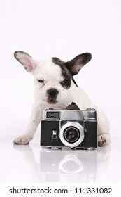 French Bulldog puppy, 3 months old, sitting with a camera in front of white background