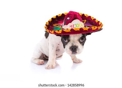 Mexican Dog Images, Stock Photos & Vectors | Shutterstock